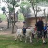 Tygryski w Strusiolandii- Dzień Dziecka