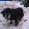 Murzyn (6260) *2005