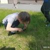 Obserwacje owadów